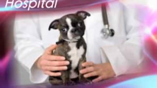Denville Animal Hospital, Denville, NJ