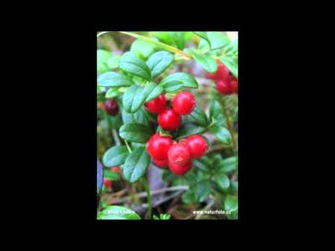 Blueberries & amp; Cranberries - YouTube