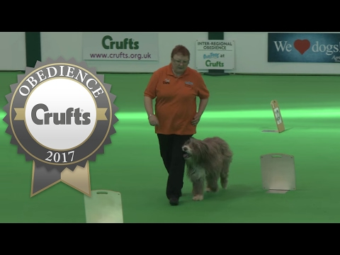 Inter-Regional Rally - Level 4 - Part 2   Crufts 2017