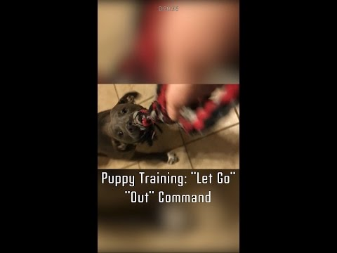 "Puppy Training: ""Let Go"" ""Out"" Command"