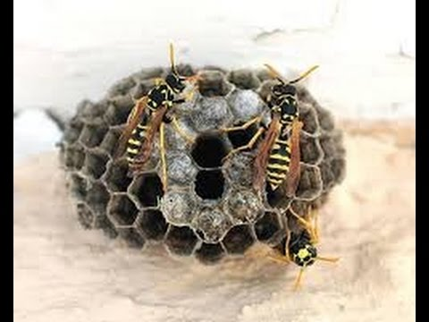 How To Get Rid Of A Small Wasp Nest | Zef Jam