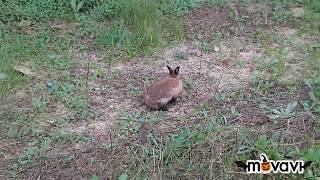 conejo en el parque- rabbit in the park Benidorm España  2018