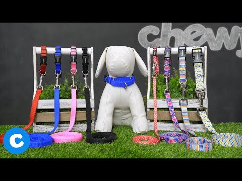 Frisco Dog Leashes And Collars | Chewy