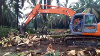 Download Video Replanting perkebunan kelapa sawit MP3 3GP MP4