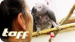 Schweine, Affen & Papageien - Exotische Haustiere in Europas größten Tierheim   taff  