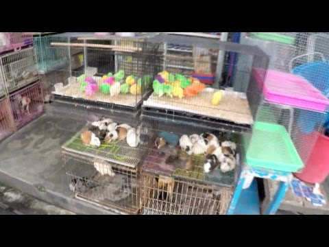 What A Pet Store In Bali Looks Like