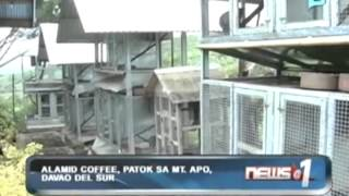 News@1: Alamid coffee, patok sa Mt. Apo, Davao Del Sur