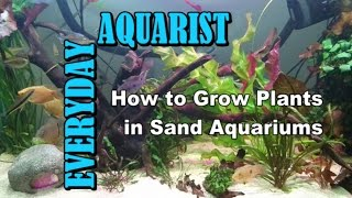 How to Grow Plants in Sand Aquariums