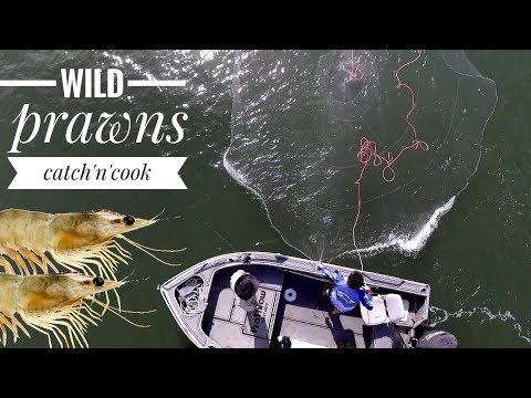WILD PRAWN FISHING MAYHEM Catch And Cook