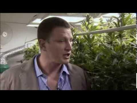 Weed Stimulating Colorado Economy?
