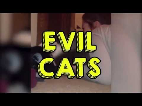 Evil Cats    BestoftheWeek HiCat