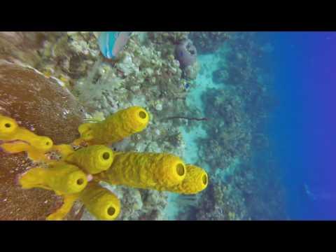 Grand Cayman Reef Dive 1/4/17