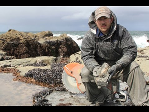 Unearthing Fossil Whales with Nick Pyenson