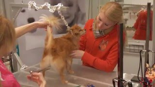 Beauty&Styling bei Groomerin Claudia Franke Hundesalon CF Expert