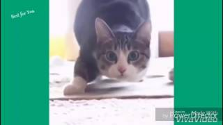Try not to laugh Cats Edition. You Will Fail