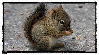 10 Najinteligentniejszych Zwierząt Świata   SpinkaFun