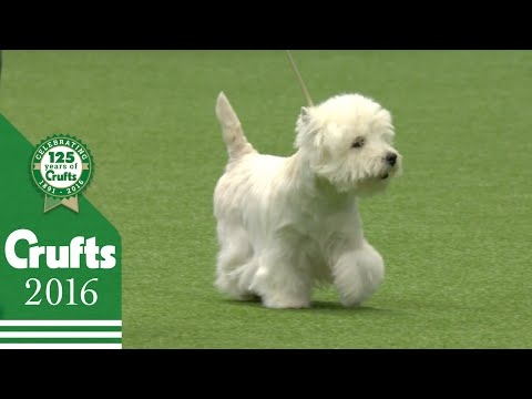 Terrier Group Winners Interview | Crufts 2016