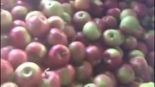Яблоки оптом от производителя(, 2015-10-22T13:46:07.000Z)