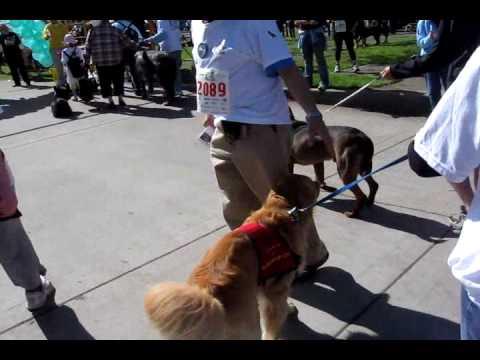 Doggie Dash 2009