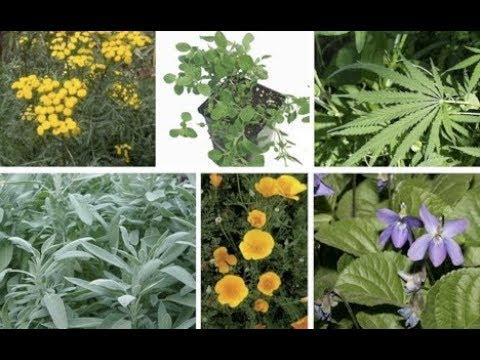 medicinal Plants &