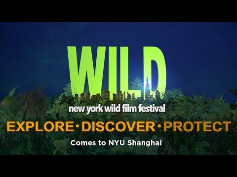 New York WILD Film Festival comes to NYU Shanghai