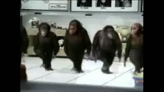 Обезьяны Джигиты лезгинка видео прикол мега .Приколы ржака жесть.