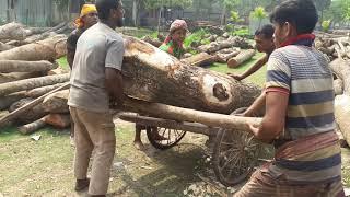 Wood Lifting Van Using to Lift by 5 Craftsmen। Wood Cutting, Lifting Saw Mill Asia-Bangladesh