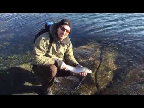 #reeltime fly fishing a Mickey Finn in the Norwegian archipelago.