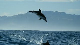 Dolphin acrobatics - New Zealand: Earth's Mythical Islands - Episode 1 Preview - BBC Two
