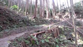モンキードッグ桃太郎が、サル数頭を山中へ追い払い行動中 戸惑いながら...