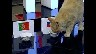 Владелицы питомника кошек: в душе мейн-куны — вечные котята