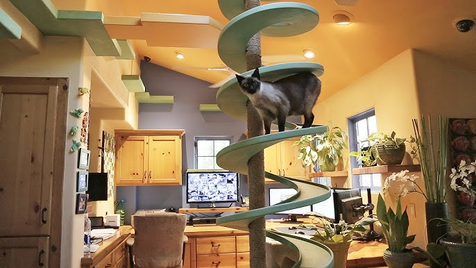 Man Turns His House Into Indoor Cat Playland And Our Hearts Explode Youtube
