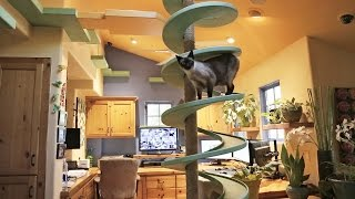 Man Turns His House Into Indoor Cat Playland and Our Hearts Explode(http://www.houzztv.com To keep his 15 rescue cats occupied, home builder Peter Cohen has constructed elaborate catwalks, tunnels, platforms and perches ..., 2014-12-20T23:42:31.000Z)