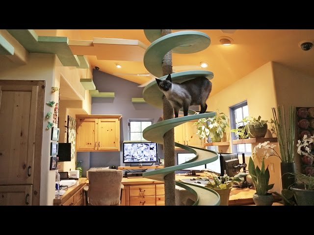 This Man Created A Simply Purr Fect Indoor Cat Playground In His House Time