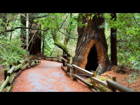 San Francisco Muir Woods And Wine Country Tour Youtube