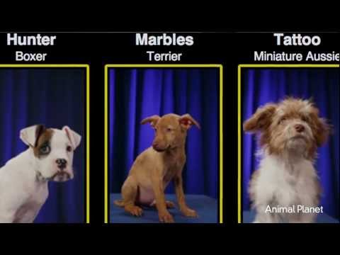 Puppy Bowl VIII Alternative to Traditional Super Bowl Sunday