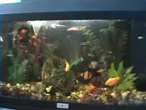 Download Tank fish 2009 .