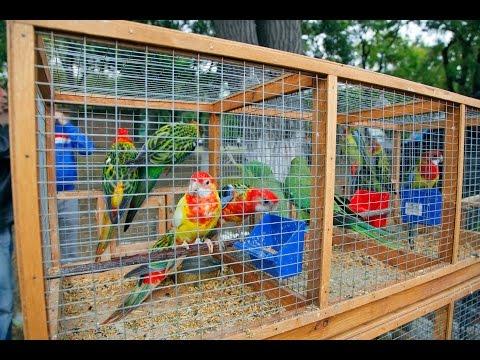 В Керчи прошла IV Международная выставка голубей и певчих птиц (видео)