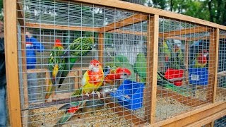В Керчи прошла IV Международная выставка голубей и певчих птиц (видео)(В мире есть много красивых вещей. Кто-то любуется закатом на берегу моря, кто-то наблюдает за движением звез..., 2016-09-24T14:21:27.000Z)