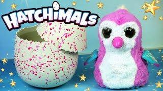 Hatchimals • Słodki Pigwinek z Jajka • Wykluwanie • Interaktywne zwierzęta • Unboxing