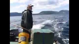 squid jiggin ground video