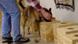 K9 Solutions Center - Passive Drug Dog Training - Dopedog.com