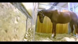 At gizli kameraya yakalandı