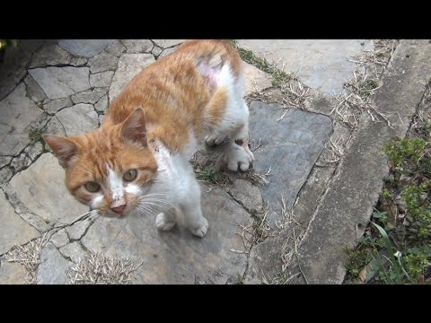download Cat asking for help