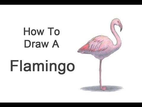 How To Draw A Flamingo Youtube