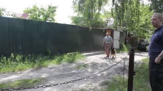 Восточно-европейская овчарка прокусила защиту
