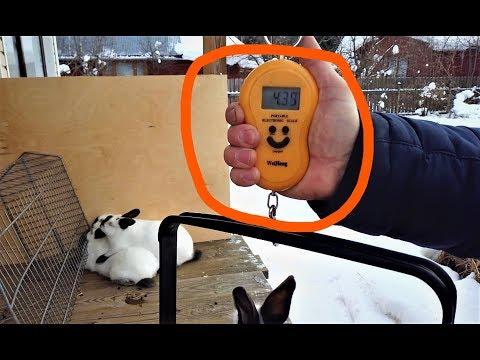Вопрос: Сколько весит заяц?