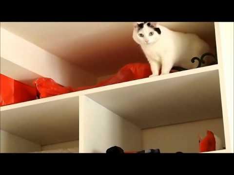 Cats Pranks