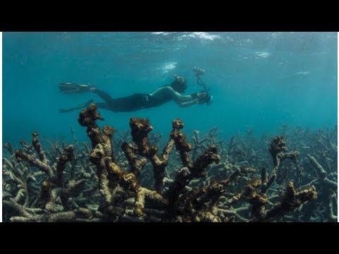 Great Barrier Reef 'cooked' by extreme temperatures: report[DIE NEWS]