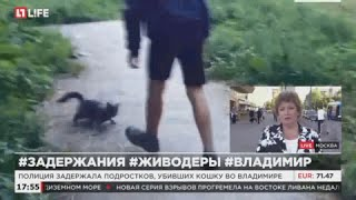 Полиция задержала подростков, убивших кошку во Владимире